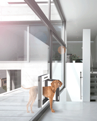 petWALK - large model for bigger dogs installed into fixed glazing
