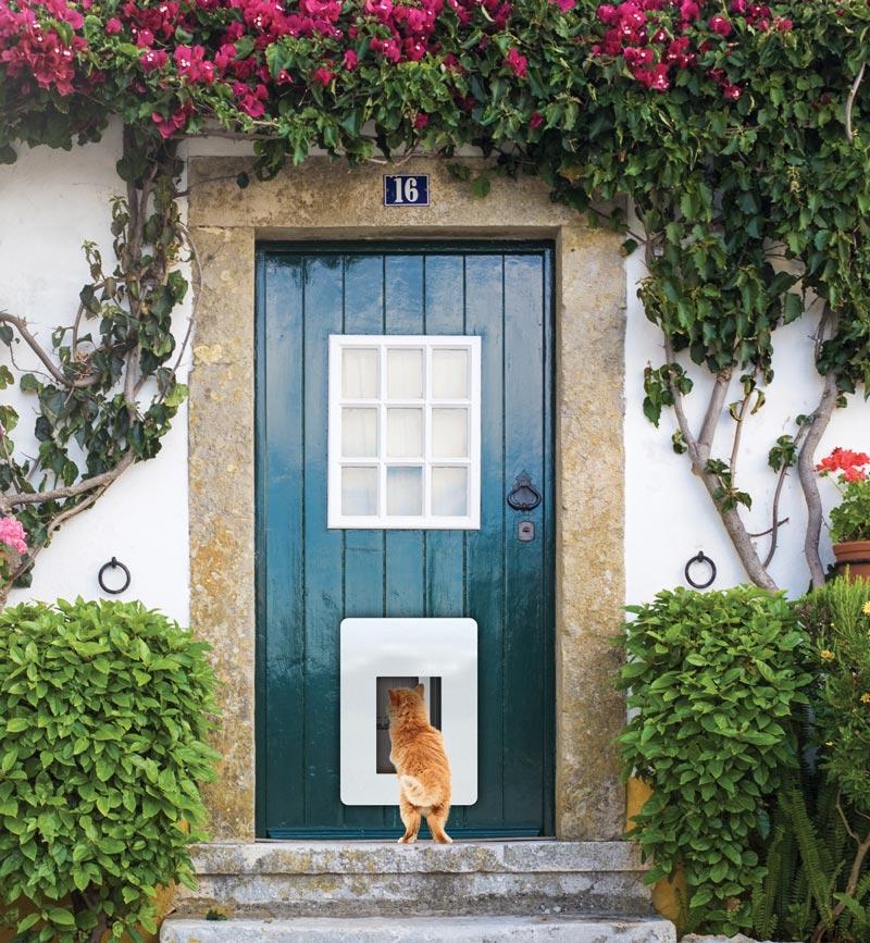 petWALK – Installation dans un porte